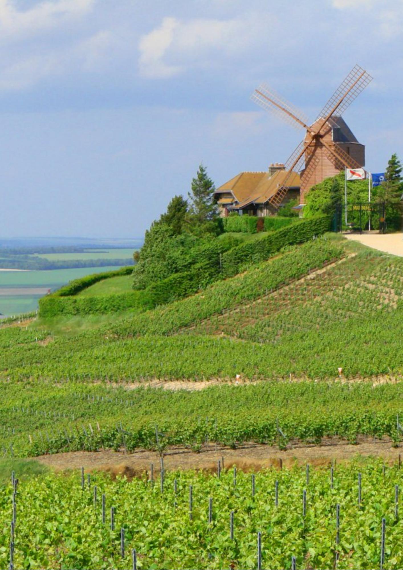 Le Moulin de Verzenay